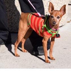 Featured Dog:  Glenda