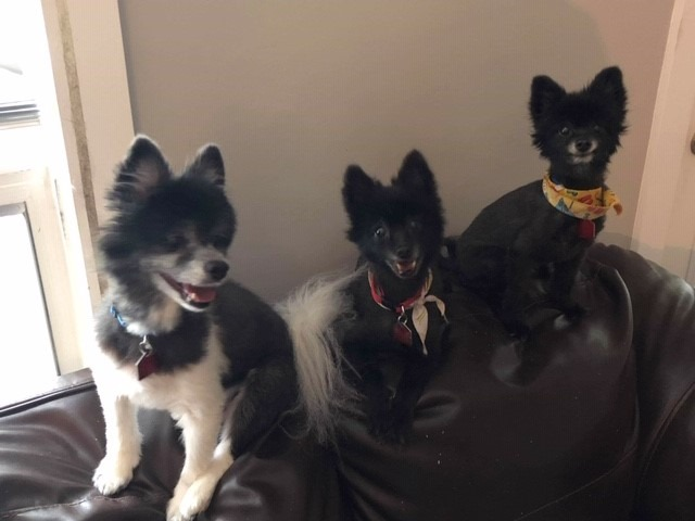 Featured Dogs: Thor, Honey & Bear